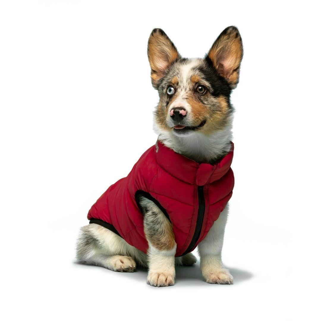 manteau-pour-chien-doudoune-matelassée-chiens-kleps-accessoires-qualité