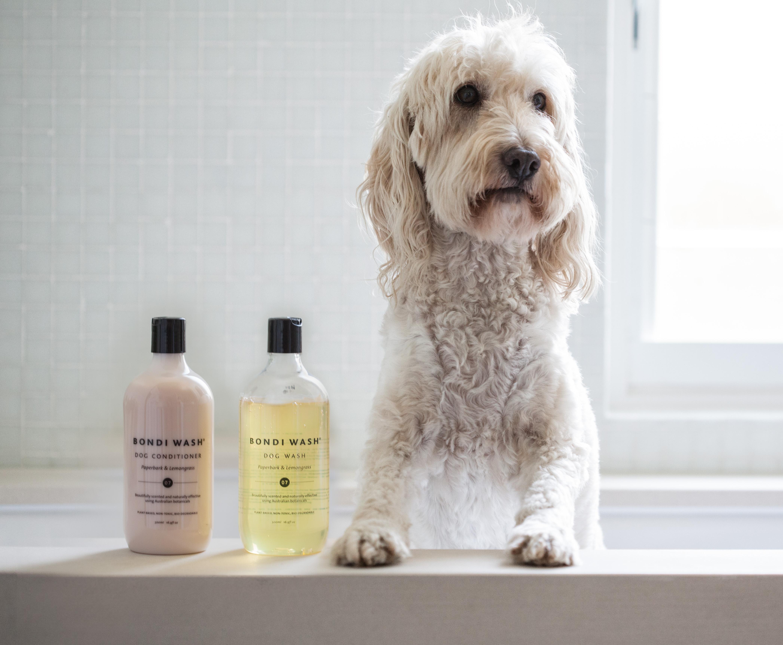 shampoing-chien-bondiwash